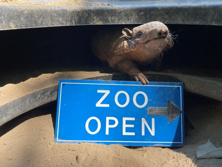 The Zoo Opens with New Regulations