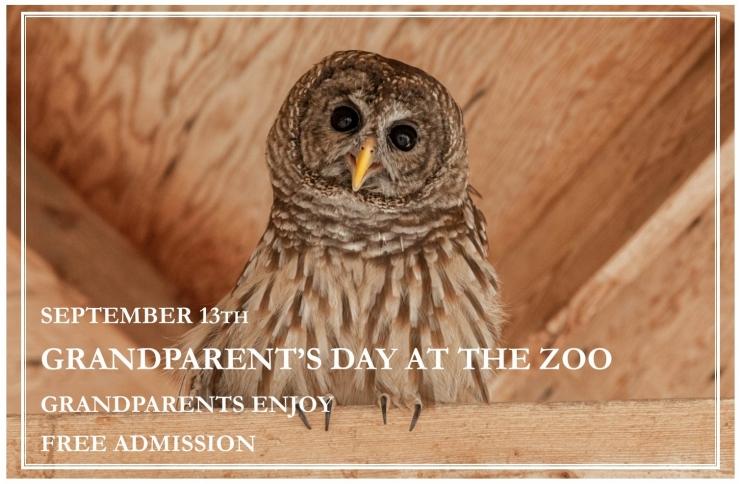 Grandparents Day Owl.jpg